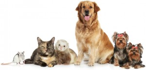 Organic Pet Care Products